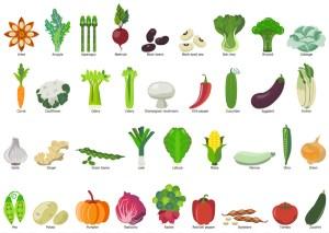 vegetables drawing easy clip clipart vegetable fruit celery elements folha diagram onion alimentos cebola example tomato garden clipartlook squash flower