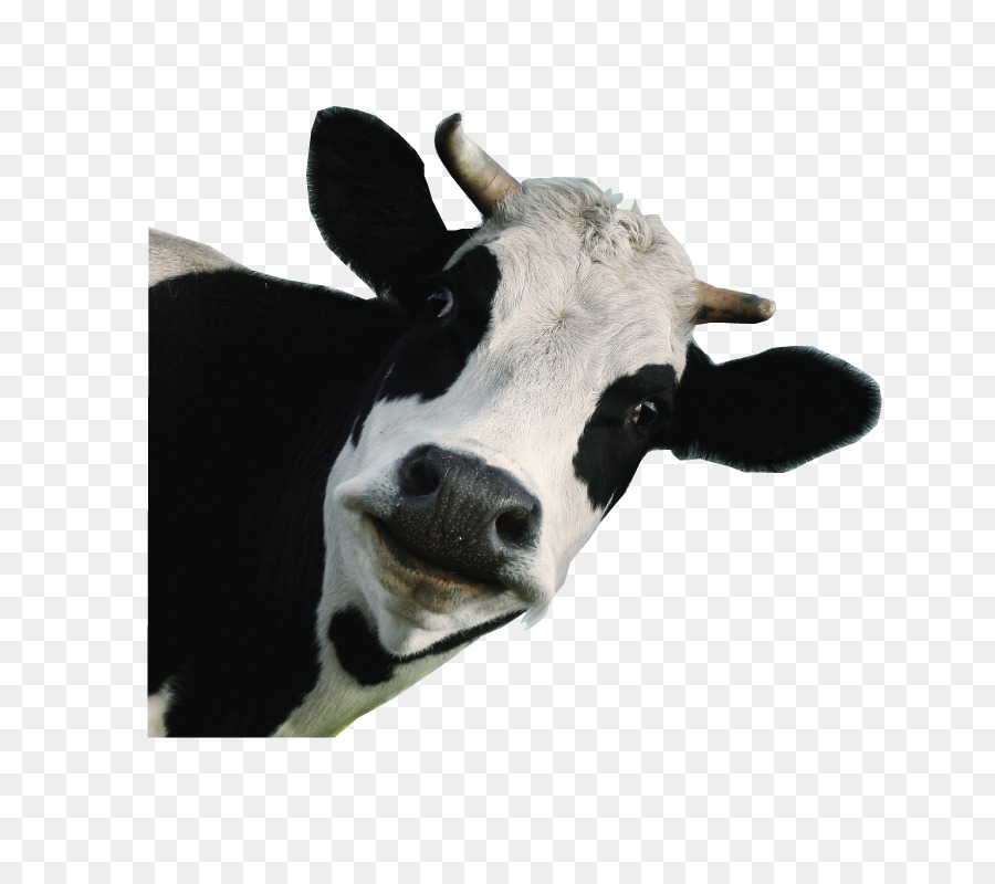 cow background png download