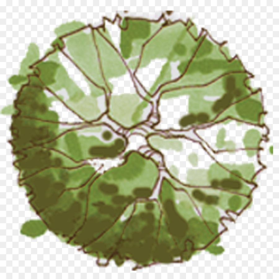 Tree Site plan Landscape architecture