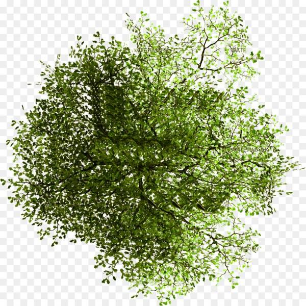 tree site plan architecture