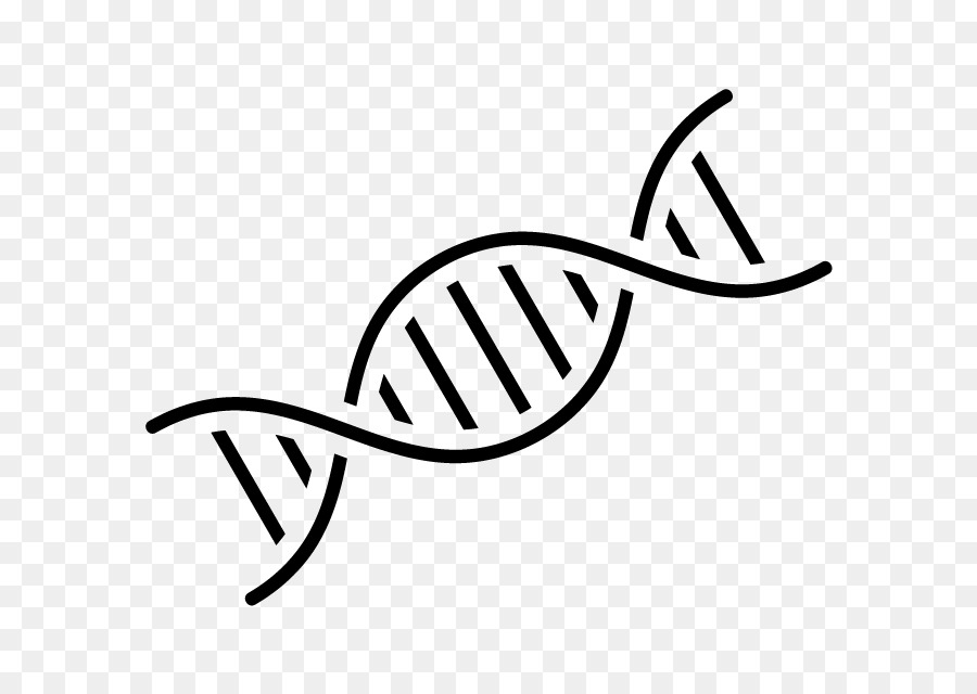 DNA Nucleic acid double helix Genetics Computer Icons
