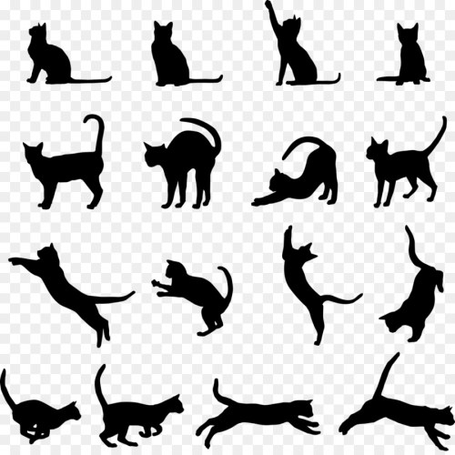 small resolution of cat kitten black cat wildlife silhouette png