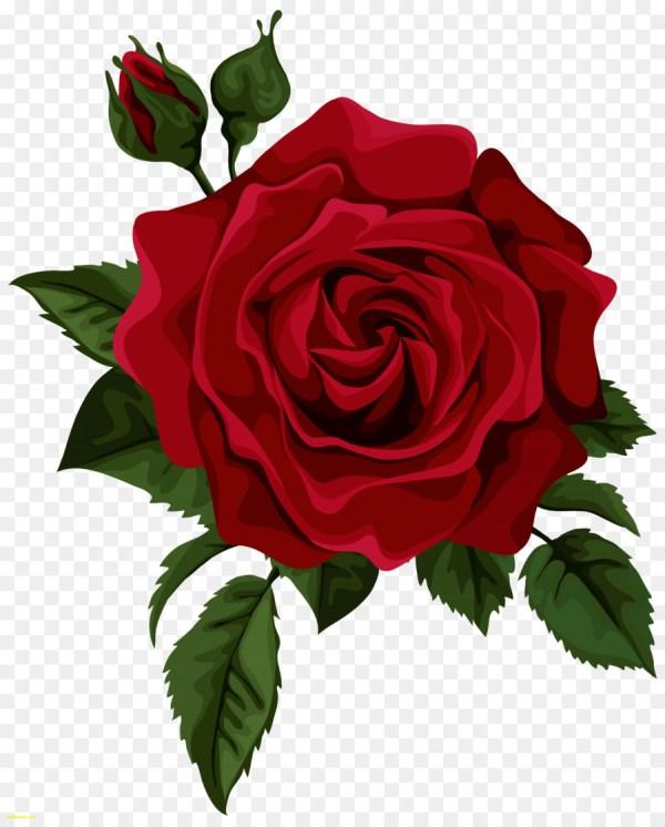 hybrid tea rose red clip art