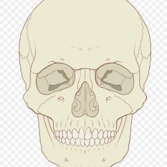 Axial Skeleton Skull Diagram Electric Wire Anatomy Human Body Medicine