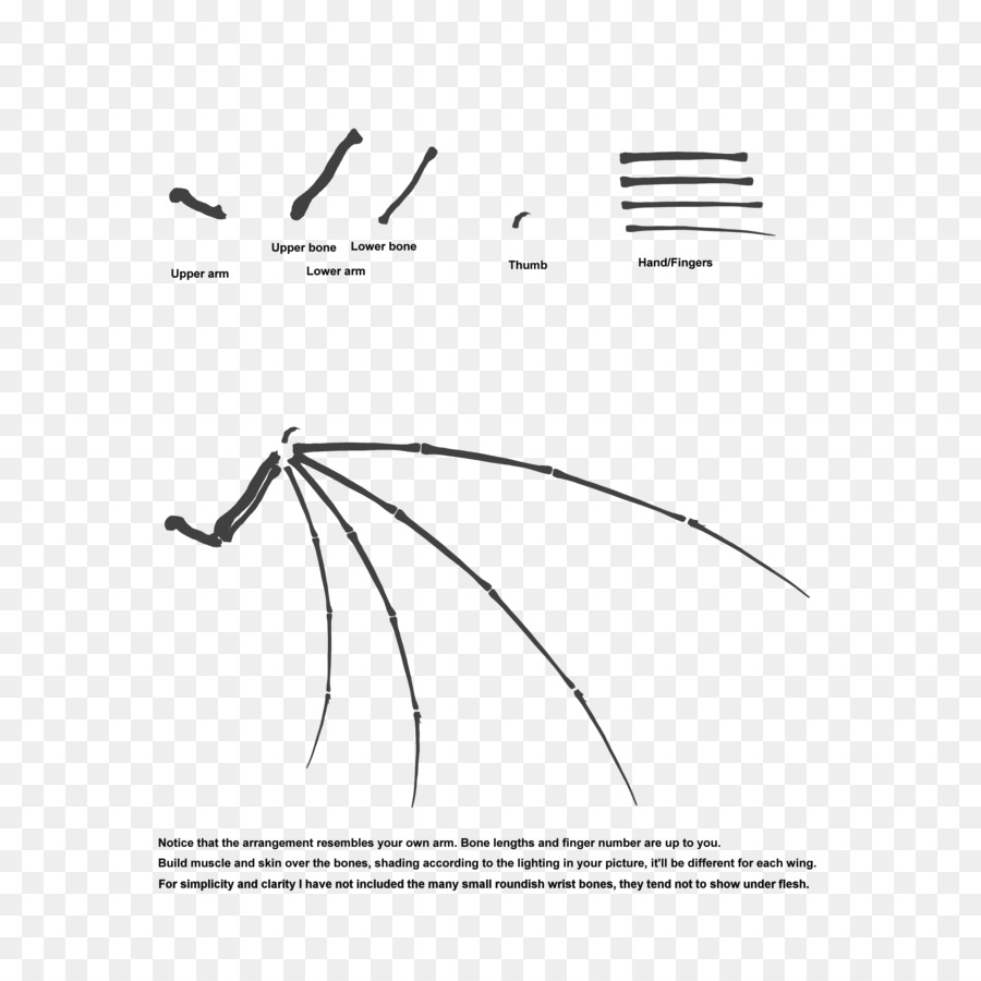 hight resolution of wing bone wing configuration symmetry point png