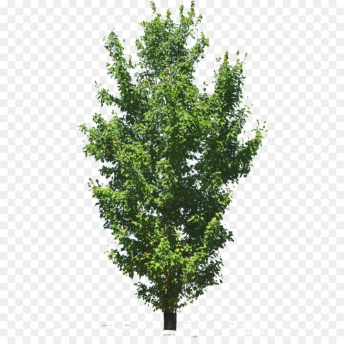 small resolution of  sprite tree diagram information 2d computer graphics computer icons chart evergreen plant shrub oak woody plant branch plane tree family