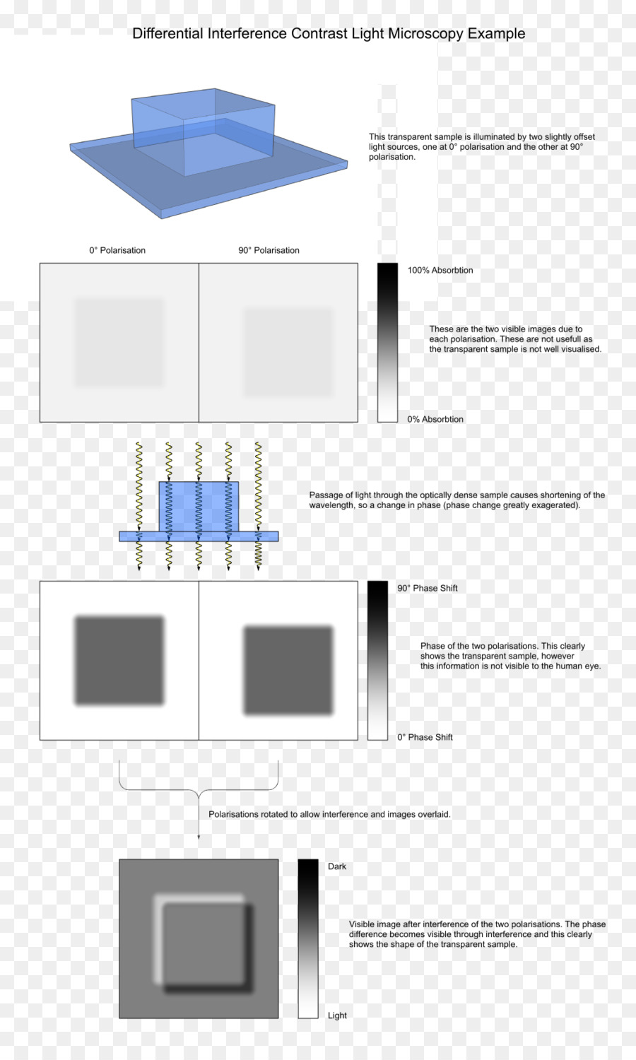 medium resolution of light differential interference contrast microscopy microscopy text diagram png