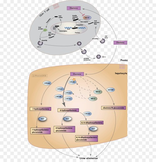 small resolution of efavirenz mechanism of action pharmaceutical drug text diagram png