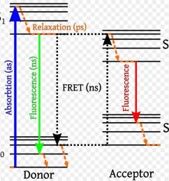 f rster resonance energy transfer energy jablonski diagram text line png [ 900 x 880 Pixel ]