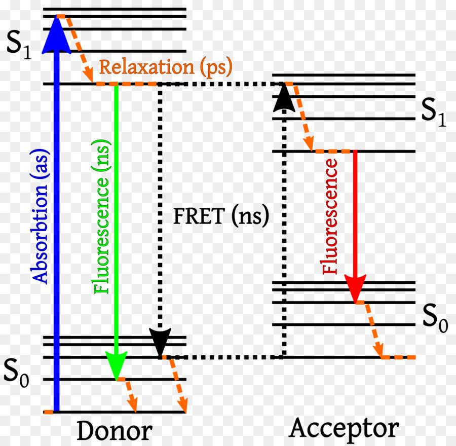medium resolution of f rster resonance energy transfer energy jablonski diagram text line png