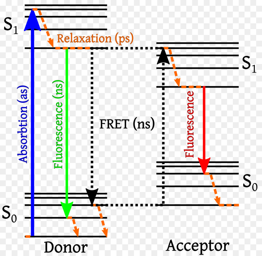 hight resolution of f rster resonance energy transfer energy jablonski diagram text line png
