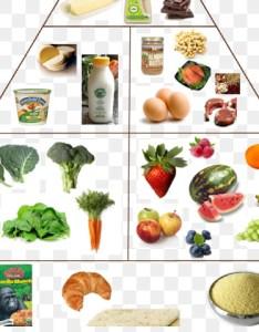 Vegetarian cuisine food group chart diet health also download rh kiss