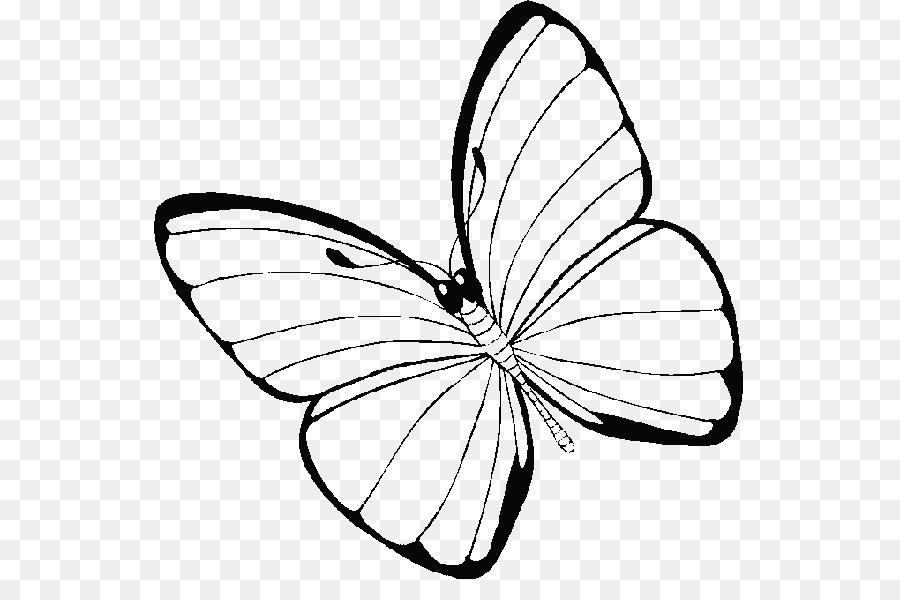 De la mariposa monarca, libro para Colorear, Dibujo de