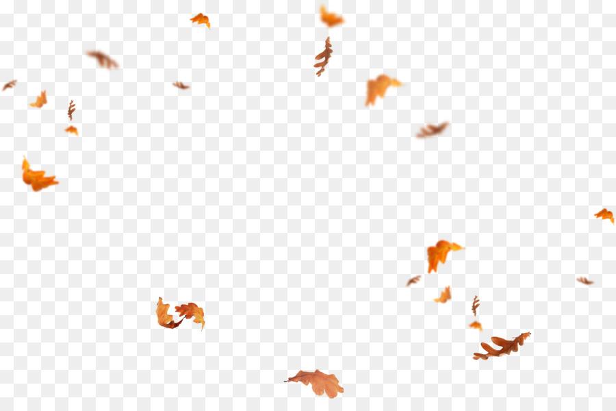 Free Fall Flower Desktop Wallpaper Leaf Portable Network Graphics Desktop Wallpaper Adobe