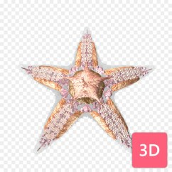 Starfish Anatomy Diagram 2002 Kia Spectra Fuel Pump Wiring Comparative Human Body Sea Png Download