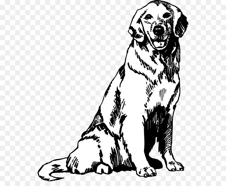 Golden Retriever Drawing Images