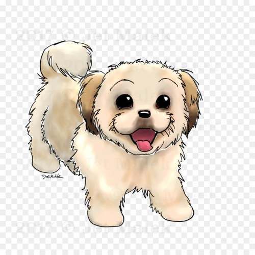 small resolution of dog breed puppy shih tzu maltese dog maltipoo puppy drawing png sketch png download 1024 1024 free transparent dog breed png download