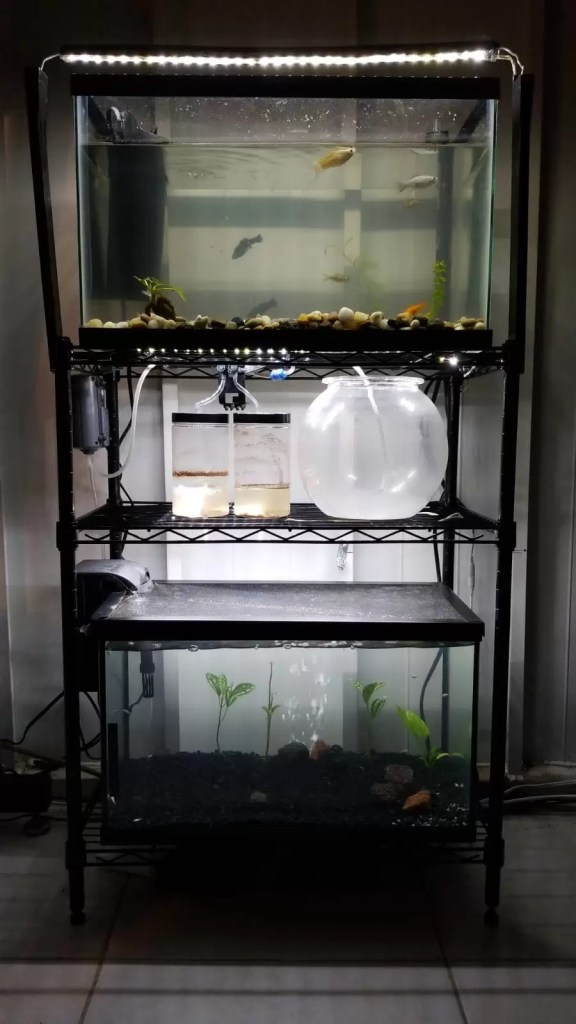 aquaria and brine shrimp hatchery setup LED