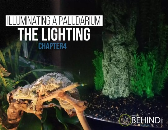 BEHINDtheBUILD chapter 4 illuminating a paludarium
