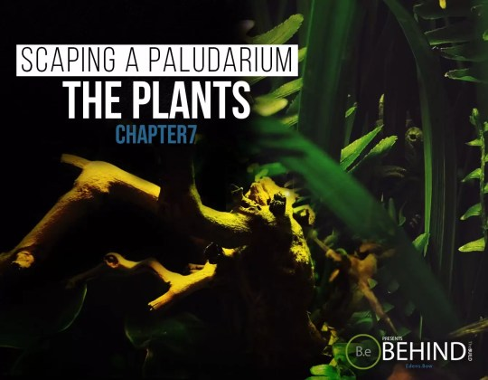 BEHINDtheBUILD chapter 7 scaping a paludarium