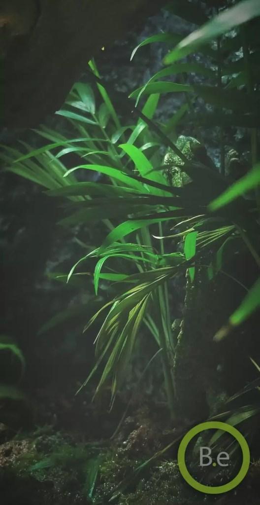 Jackson chameleon camouflaged in this paludarium DIY
