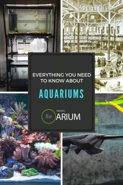 Everything you need to know about aquariums