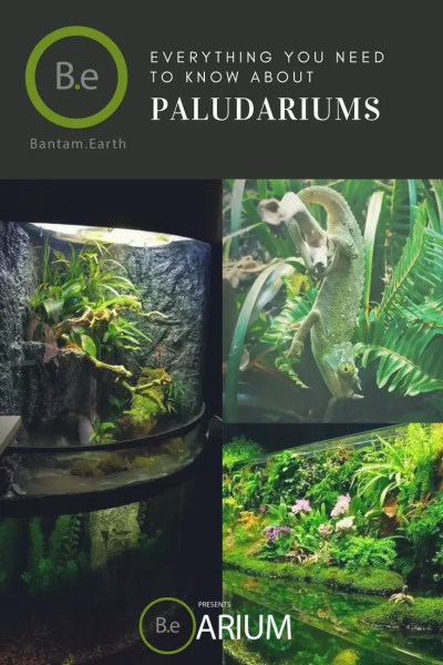 the ultimate paludarium guide