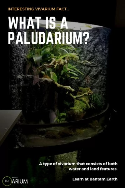 what is a paludarium?