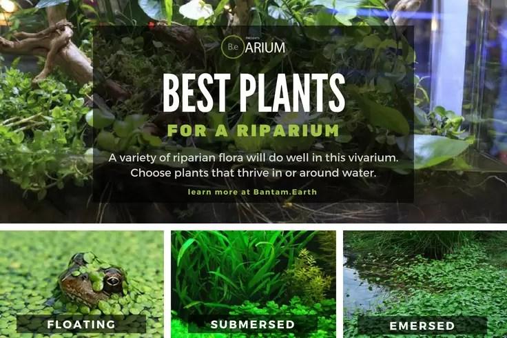 Best types of riparium plants