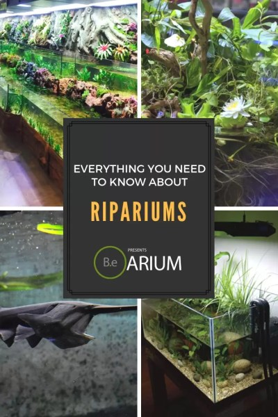 Everything you need to know about ripariums