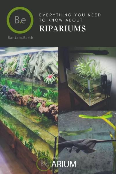 The ultimate riparium guide