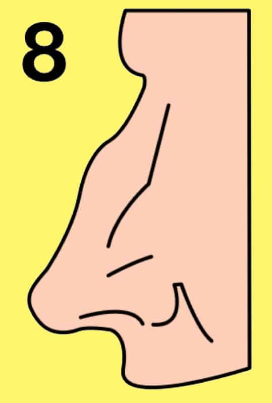 The shape of your nose reveals your personality
