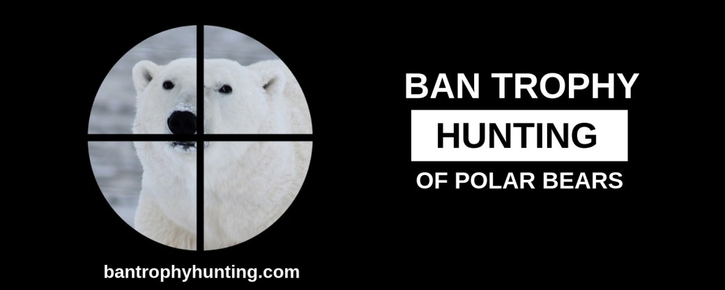 Polar Bear Petition Banner