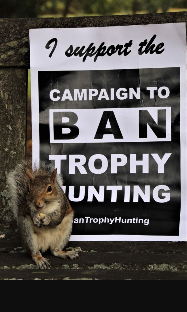 Amy the Ban Trophy Hunting Campaigning Squirrel