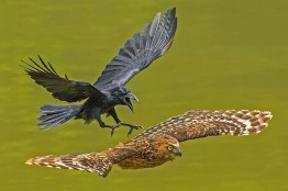 national-geographic-nature-photography-awards-2016-7