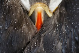 national-geographic-nature-photography-awards-2016-8