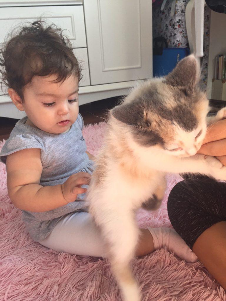 Çocuklarda kedi sevgisi
