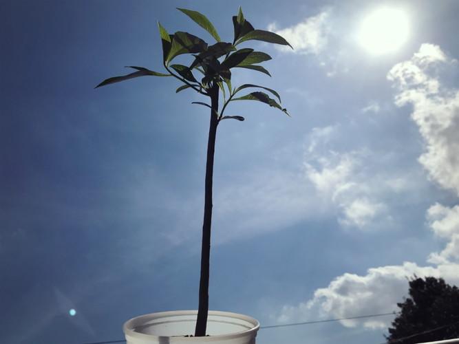 バオバブの木に水やり2018.10.10