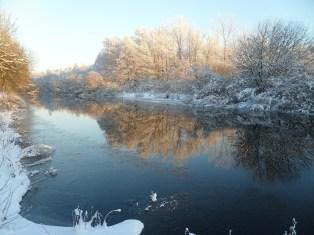 Auenlandschaft im Winter