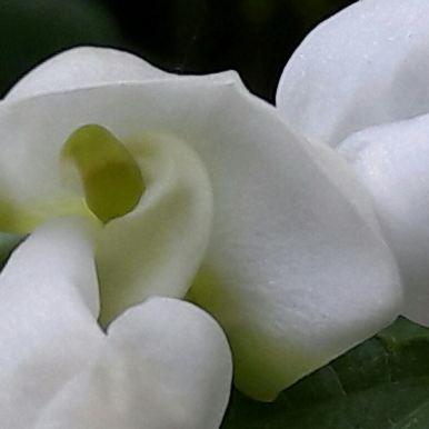 À quoi rêvent les fleurs ?