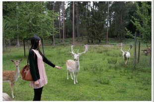 【生活在德國】在森林遇見白鹿?