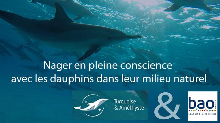 dauphins-17-08-2016-2