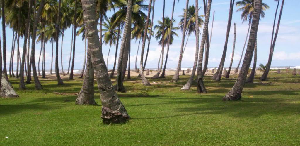 Respaldan primer festival nacional del coco