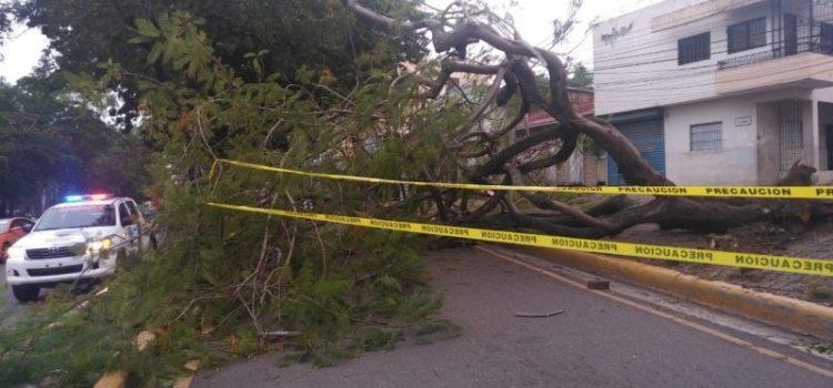 Lluvias y vientos provocan caos en varios sectores