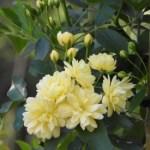番の州公園 バラ見ごろ