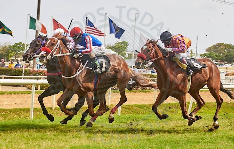 Stolen (center) is favoured for tomorrow's feature race.