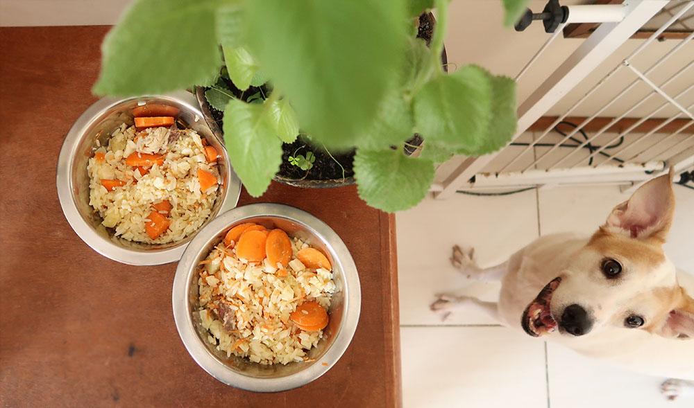 Alimentação Natural para Cães - AN para cães