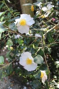 barbarakolson at Magnolia Plantation
