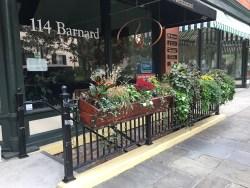 barbarakolson.com in Savannah, GA