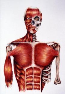 Barbara Mapelli, Studi anatomici